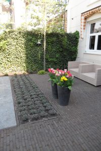 In een stadstuin in Den Haag de beplanting aangelegd na de realisatie van een beplantingsplan.